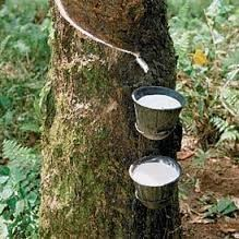 Natural rubber content in rubber tracks